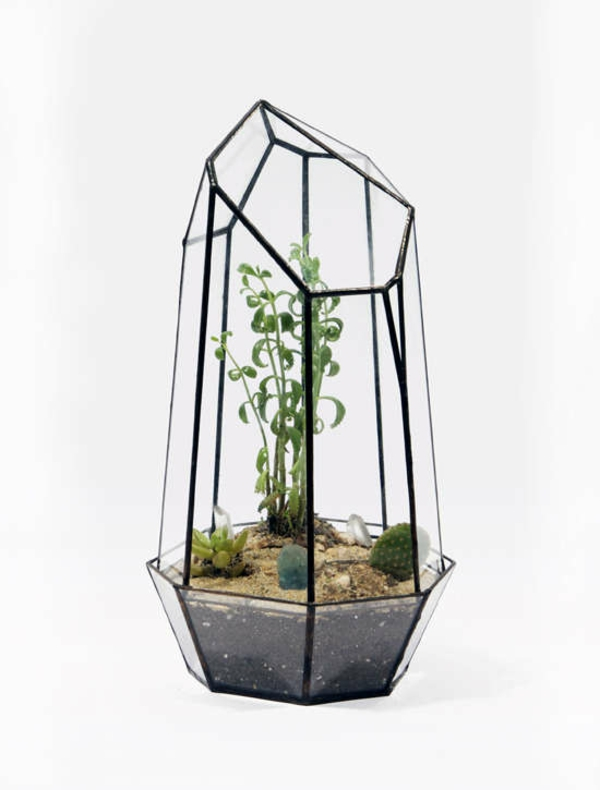 terrarium plants terrarium itself make indoor plants easy to clean