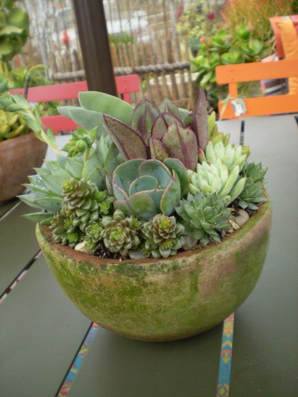 table decoration succulent garden area
